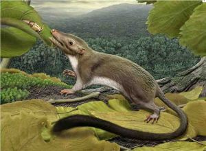 Artist's impression of the common ancestor of placental mammals (Credit: Science magazine)