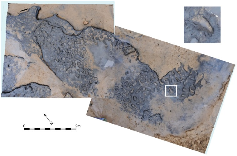 View from above of the well-trodden trackway at Happisburgh, with an enlarged example of one of the foot prints (credit: Ashton et al 2014 PLoS1)