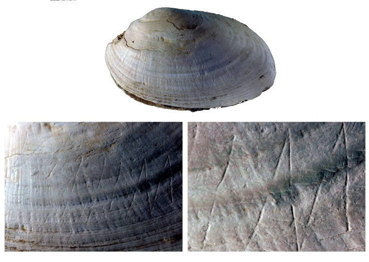 Progressively enlarged views of freshwater clam from Eugene Dubois's collecti9on from Trimil, showing clear evidence of deliberate engraving. (credit: Joordens et al., 2014 in Nature; photos by Wim Lustenhouwer, VU University Amsterdam