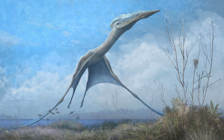 launch of Hatzegopteryx