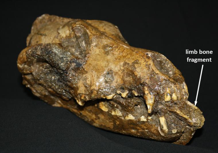 paleolithic dog